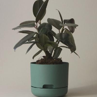 Nest-Seven-Mr-Kitly-Pots-Dark-Moss-170