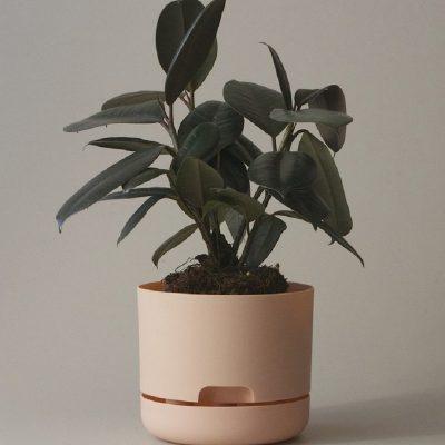 Nest-Seven-Mr-Kitly-Pots-Pale-Apricot-170