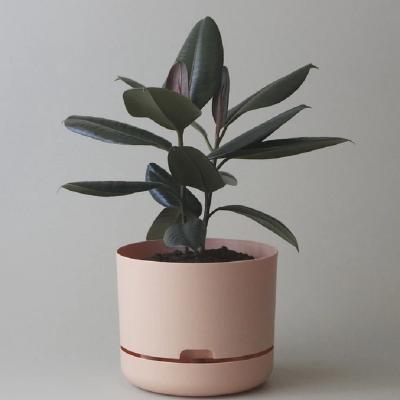 Nest-Seven-Mr-Kitly-Pots-Pale-Apricot-250