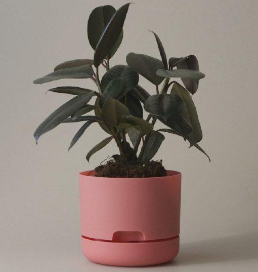 Nest-Seven-Mr-Kitly-Pots-Persimmon-170