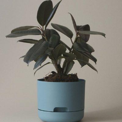Nest-Seven-Mr-Kitly-Pots-Pond-Blue-170