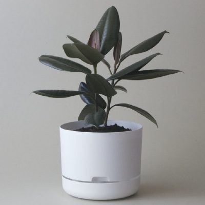 Nest-Seven-Self-Watering-Pot-White-250-Mr-Kitly.jpg