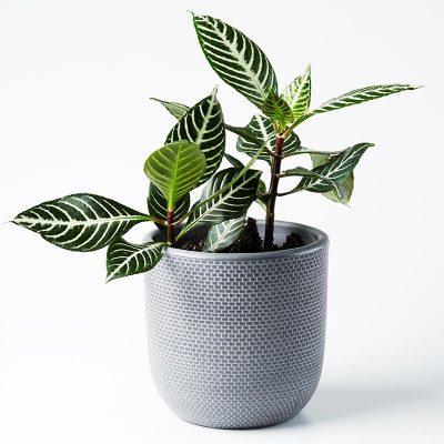 Nest-Seven-Tweed-Pot-Charcoal-Jones-Co.jpg