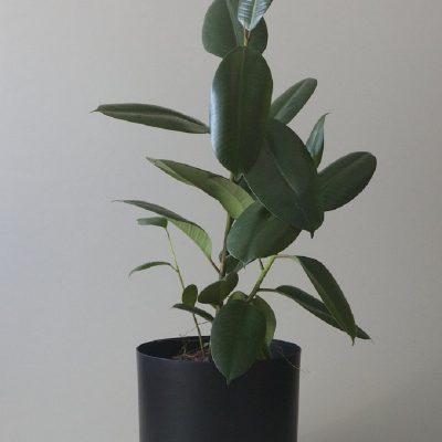 Nest-Seven-Self-Watering-Pot-Black-300-Mr-Kitly.jpg