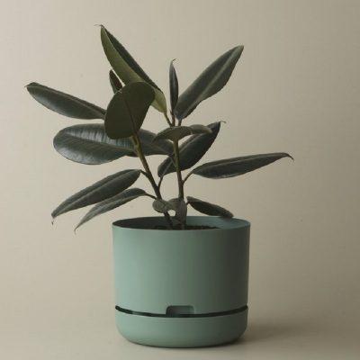 Nest-Seven-Self-Watering-Pot-Cabinet-Green-250-Mr-Kitly.jpg