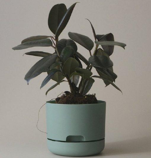 Nest-Seven-170-Cabinet-Green-Mr-Kitly.jpeg