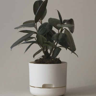 Nest-Seven-170-White-Linen-Mr-Kitly.jpeg