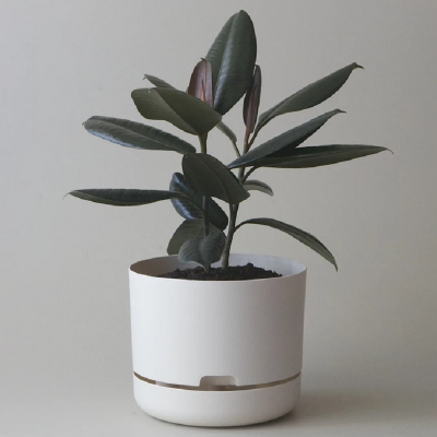 Nest-Seven-Mr-Kitly-Pots-White-Linen.png