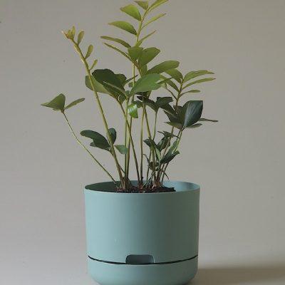 Nest-Seven-Cabinet-Green-215-Mr-Kitly.jpg