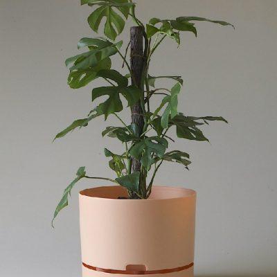 Nest-Seven-Pale-Apricot-300-Mr-Kitly.jpg